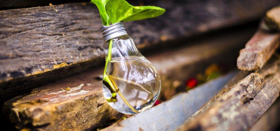 Ampoule posée sur des morceaux de bois et contenant une feuille verte